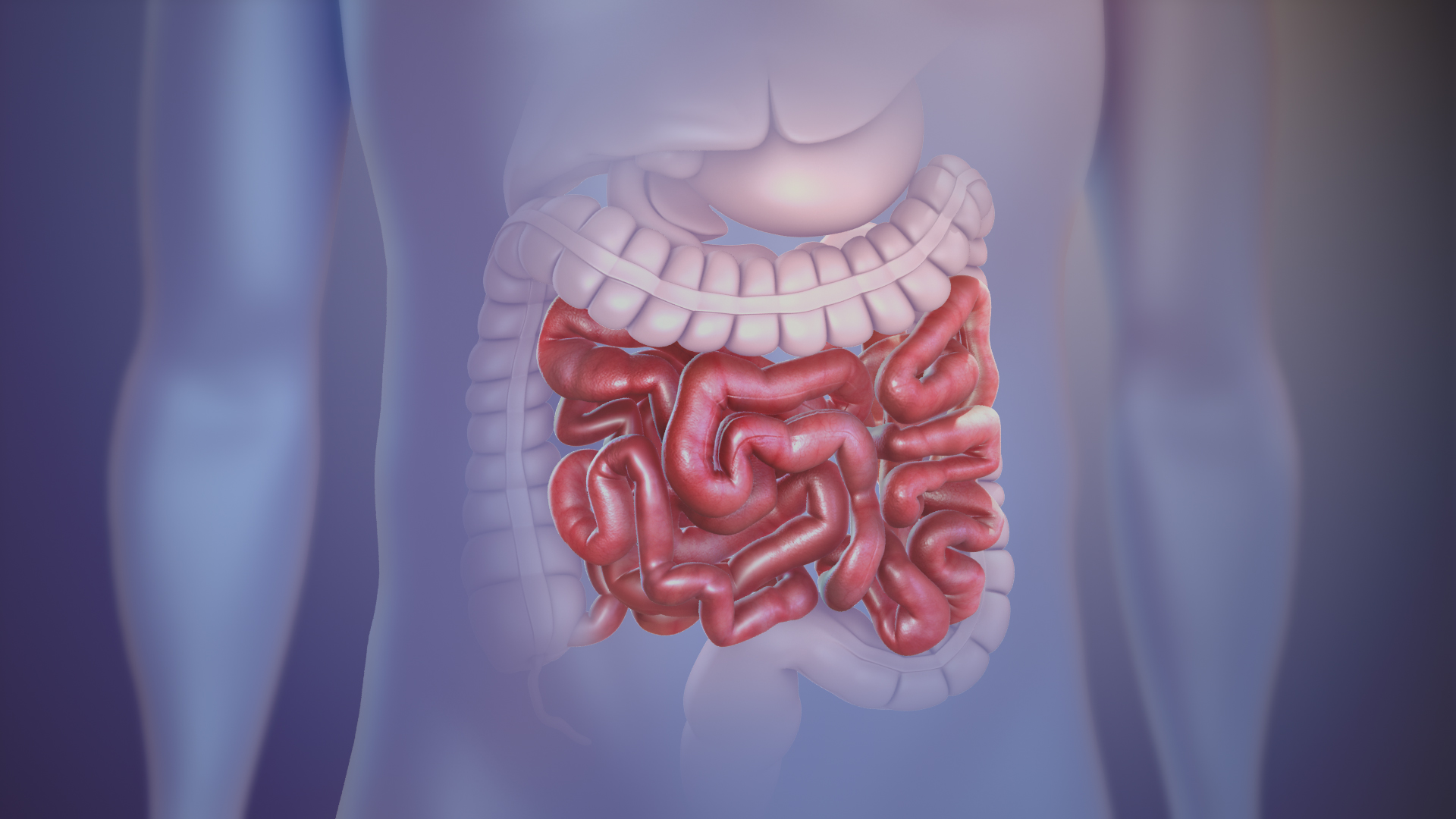 The importance of your gut health - small intestine