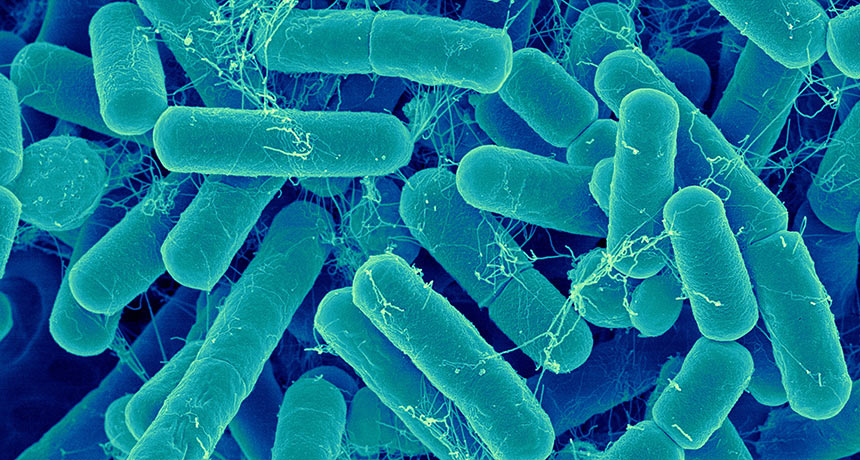 The Importance of your gut health - intestinal bacteria